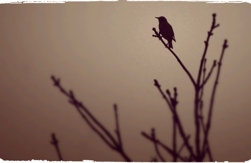 bird at dawn
