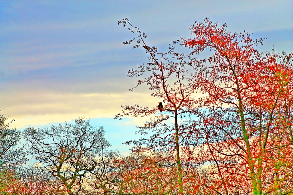 bird in colourful trees