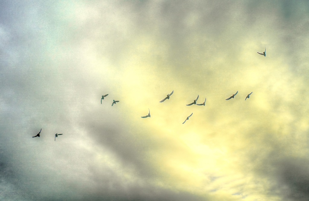 birds flying by