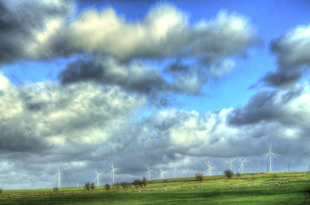 Sheep under the wind turbines & clouds