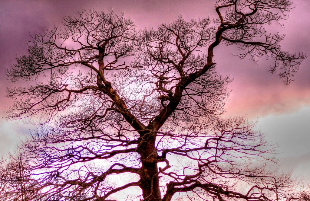 tree with dark clouds