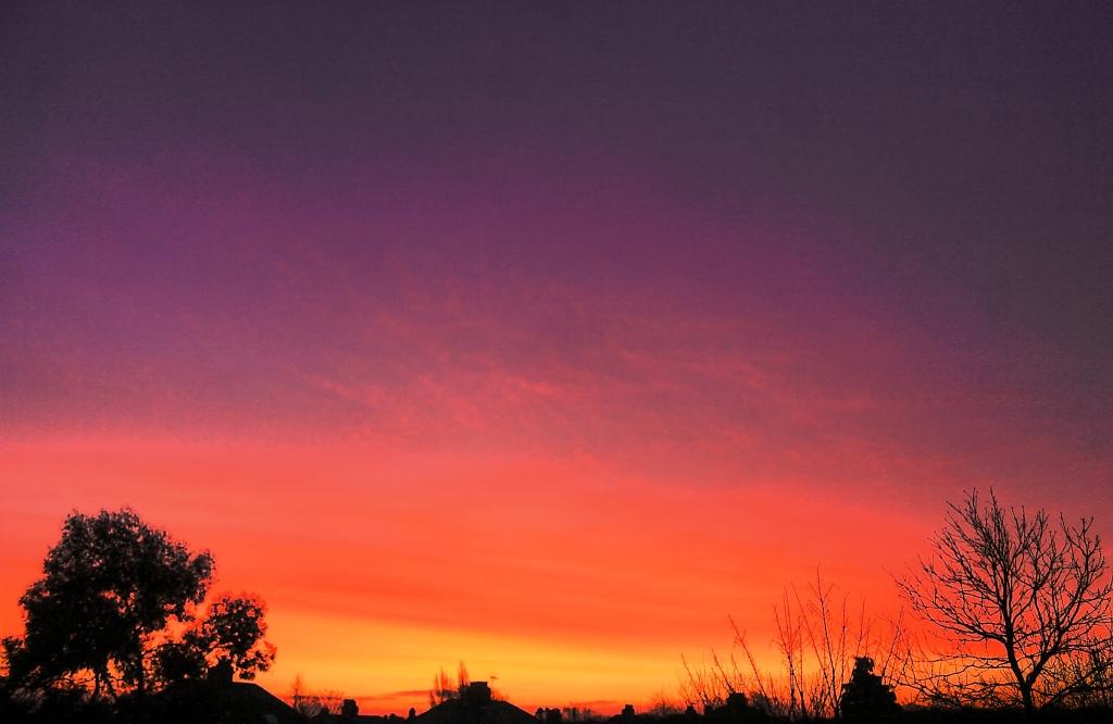 two trees sunrise