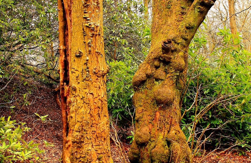 arguing trees