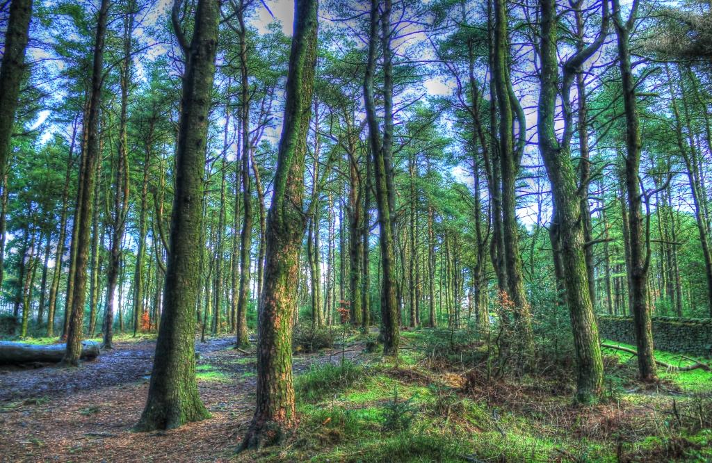 beacon fell trees green