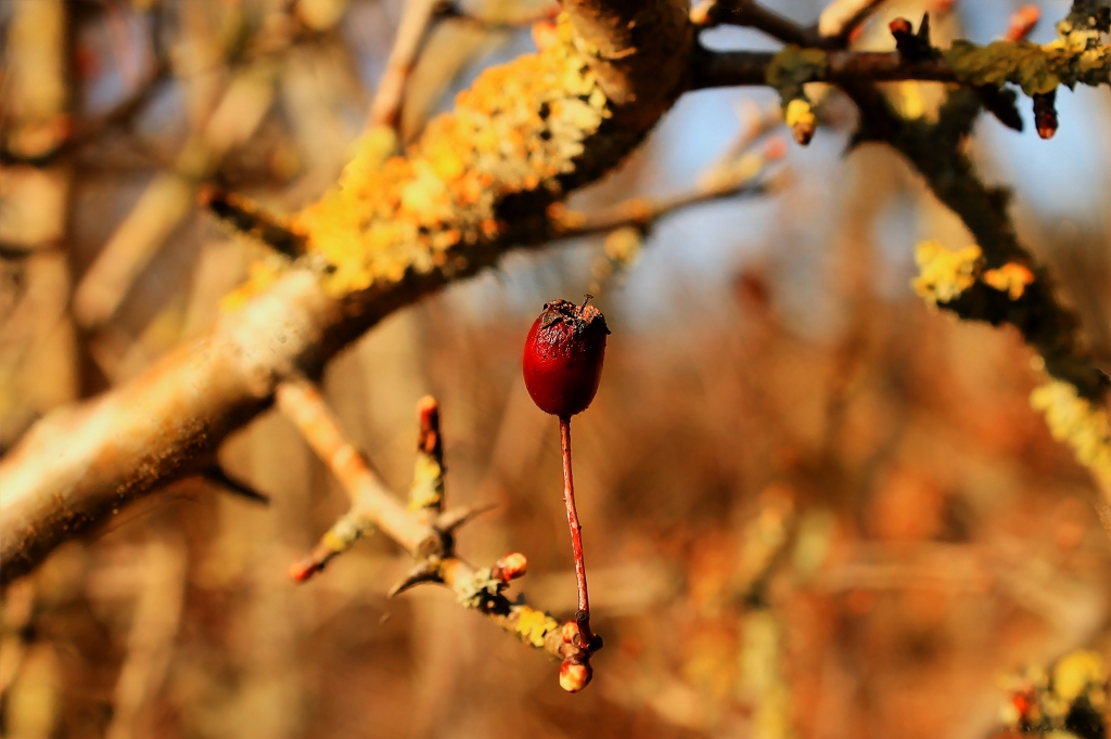 berry on tree