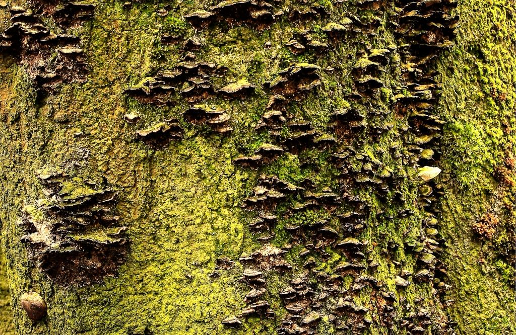 tree trunk fungus