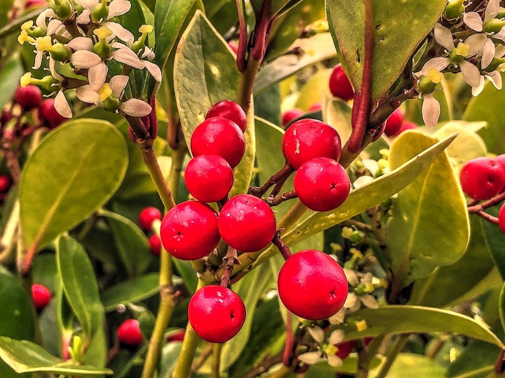 berrys and petals