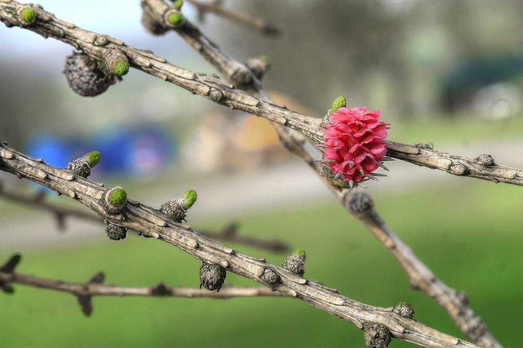 fir cone starts life