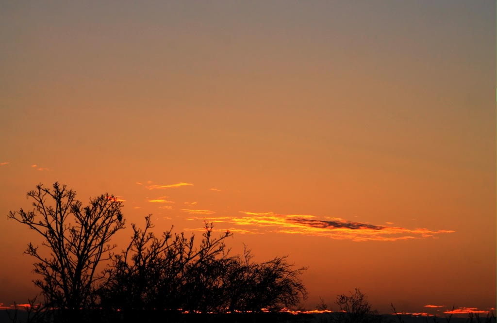 sky gold streak