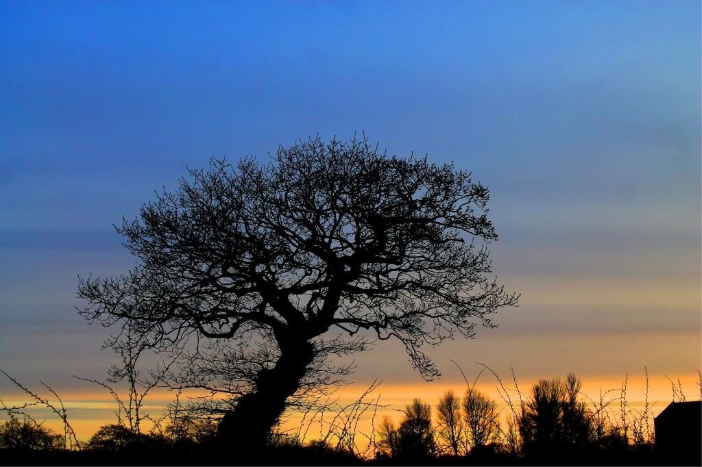 tree to God