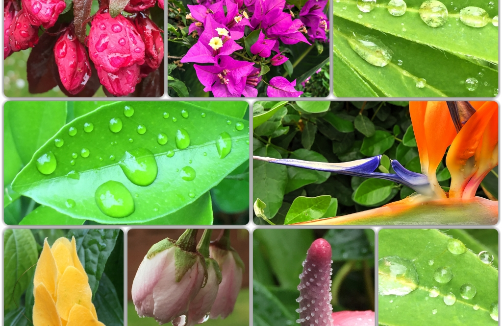 Flowers, colour, rain