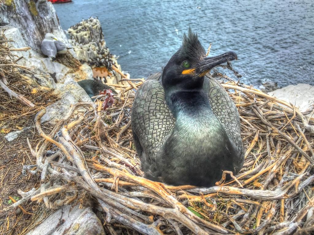 crossbill on edge in nest