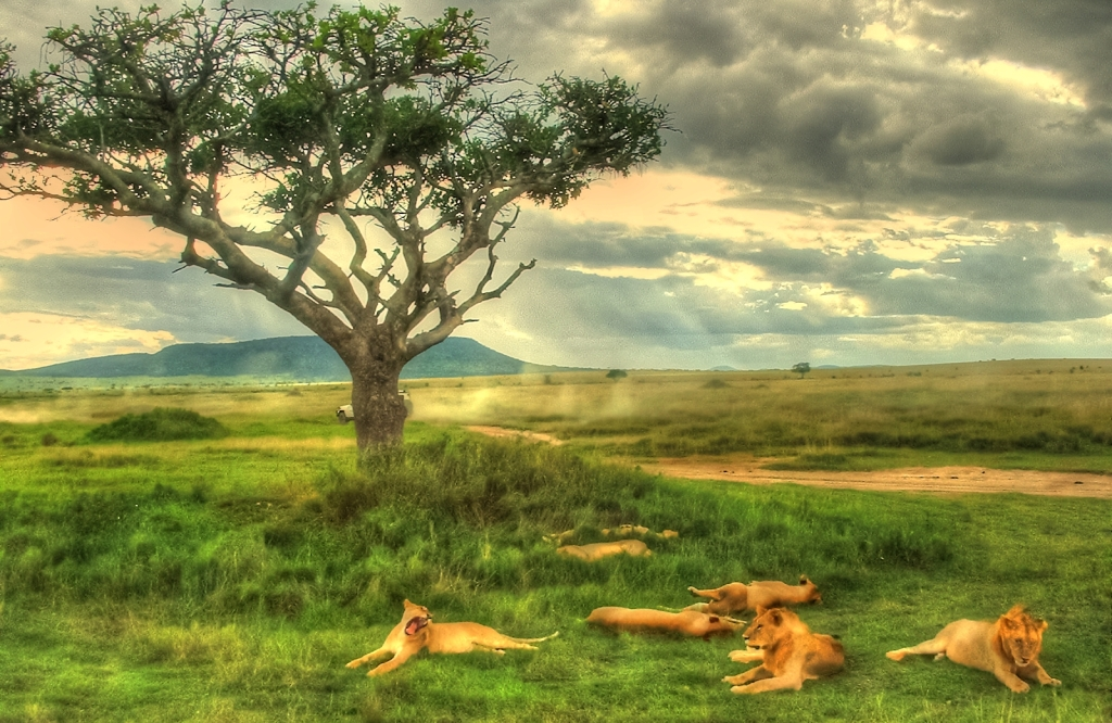 Family of lions dozing