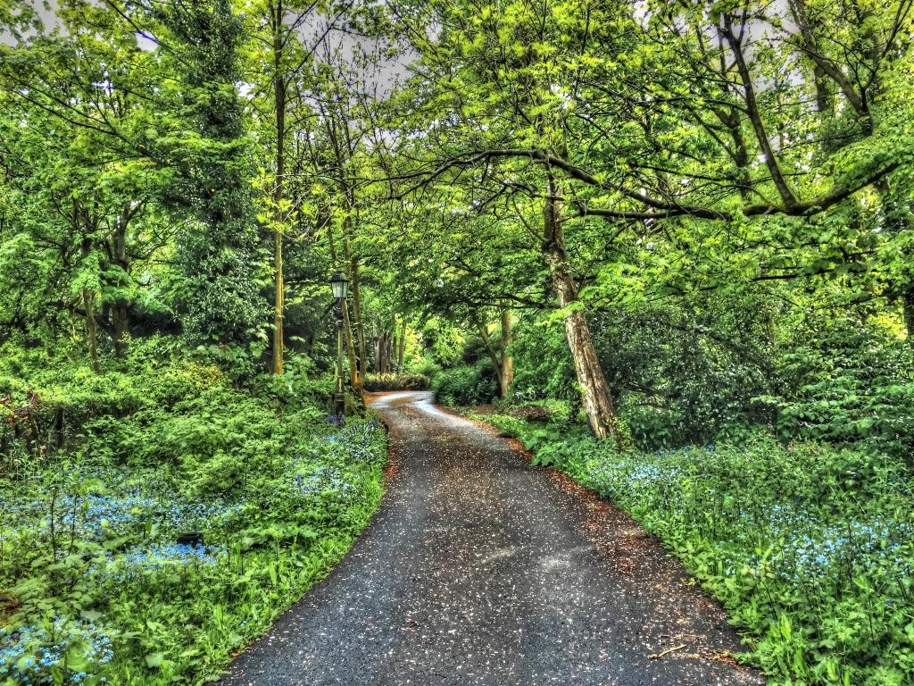 sheltered lane