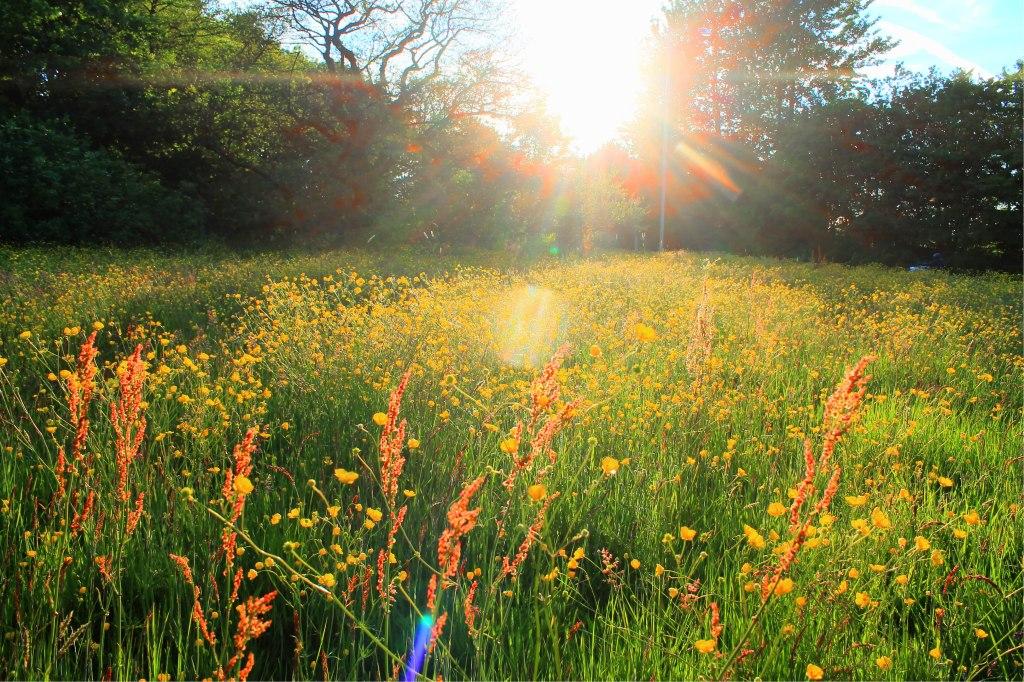 grass sunlight