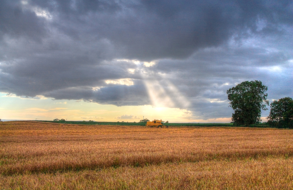 combine in field