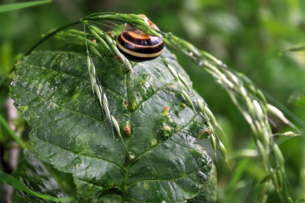 snail on grass