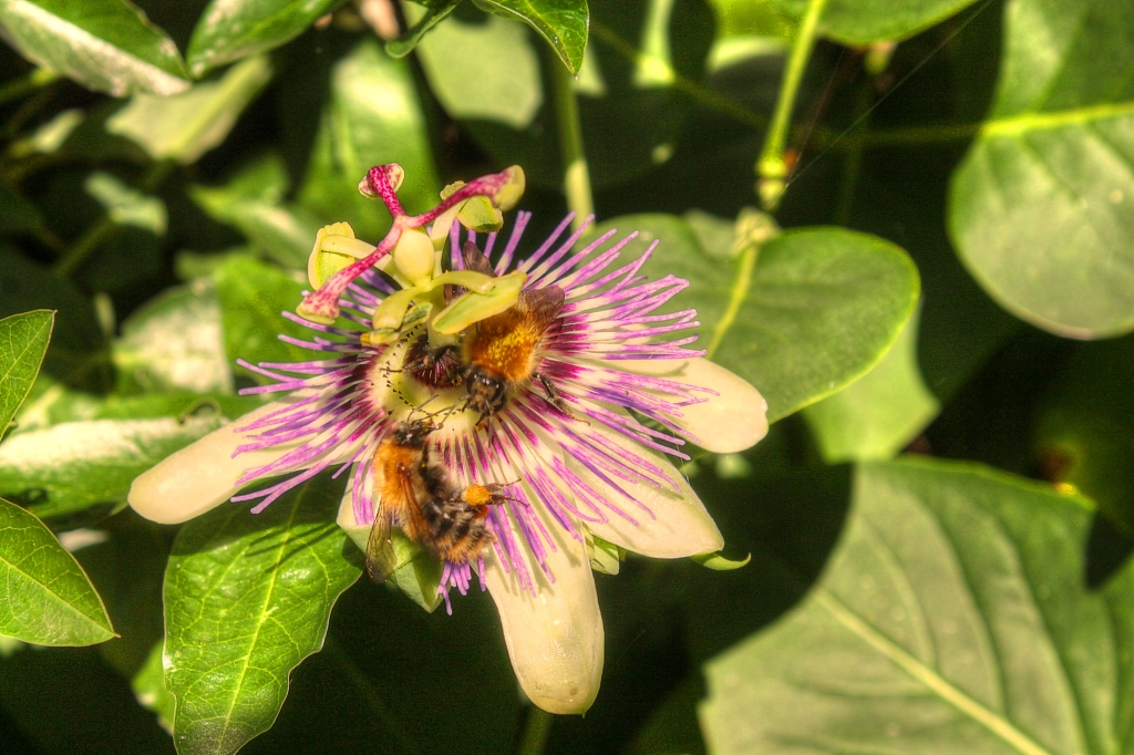 flower with bees working