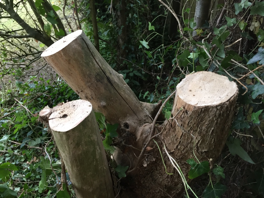 Three stumps