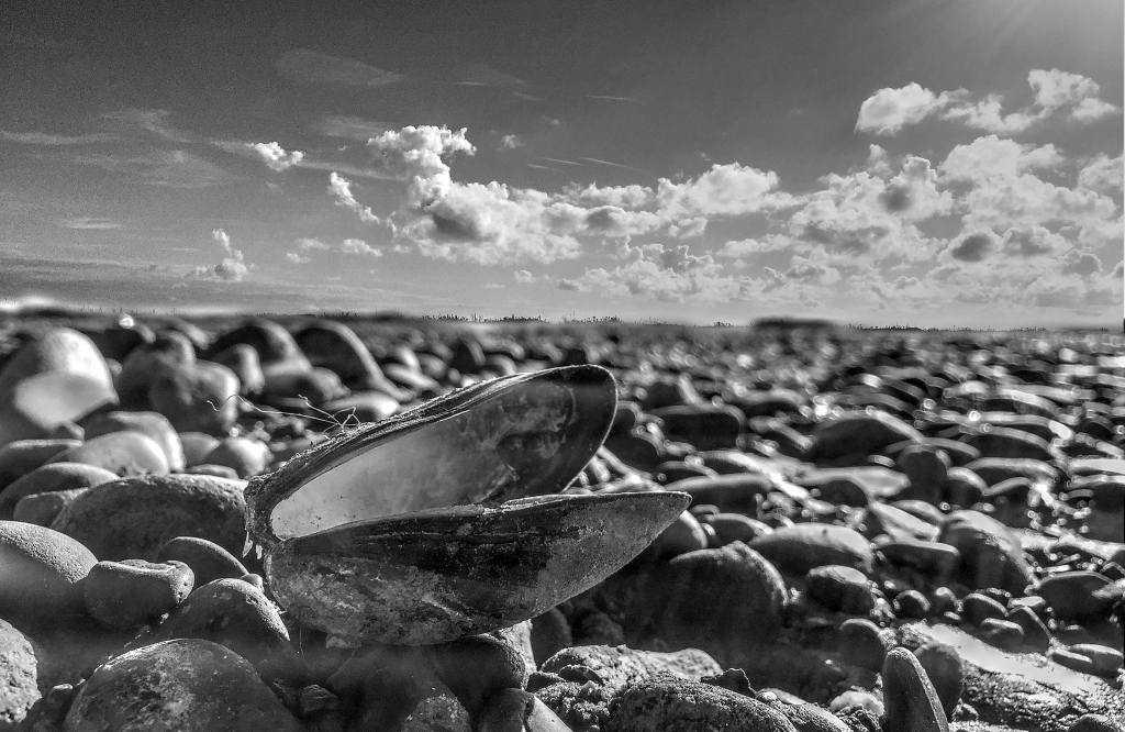 shell, stones and sky