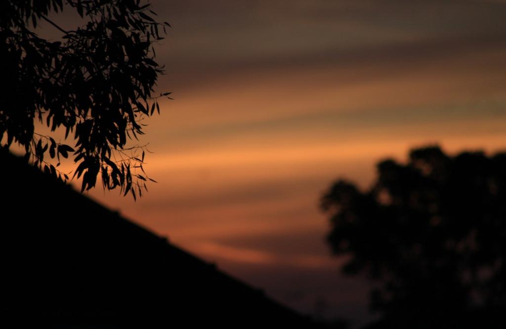 Sunrise, focus on branches