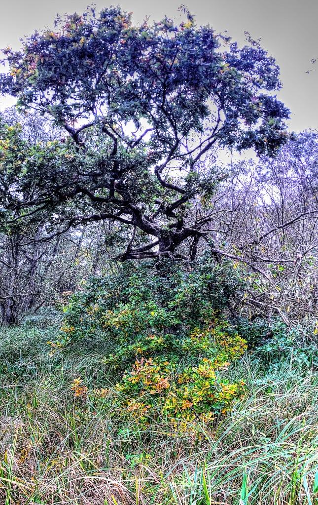 oak tree at Moore