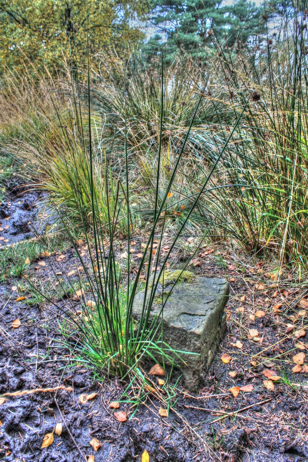 Corner stone