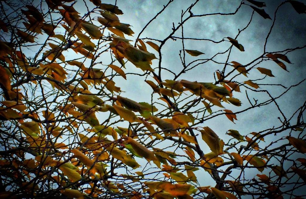 leaves on tree