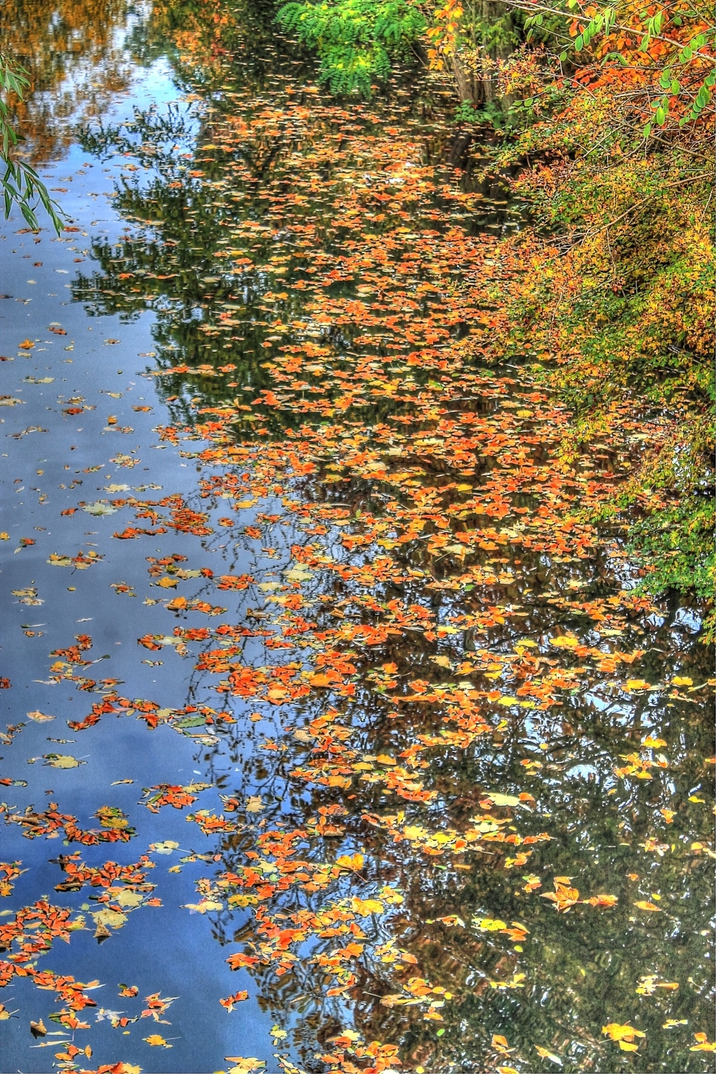river with leaves