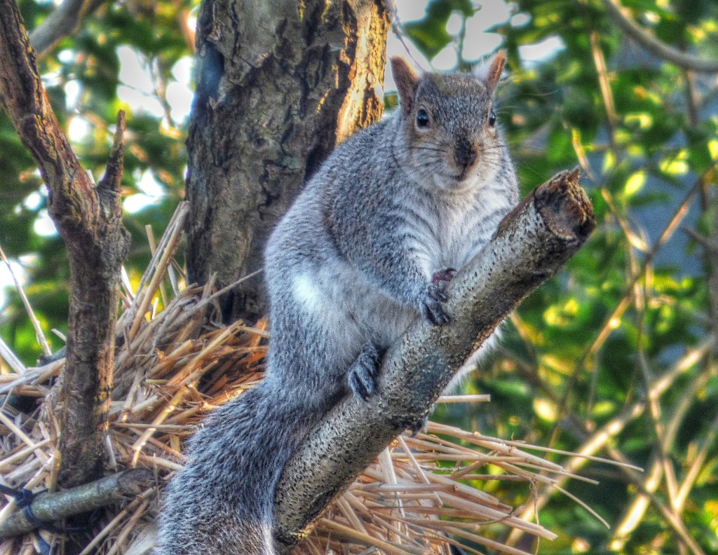 squirrel1cropped