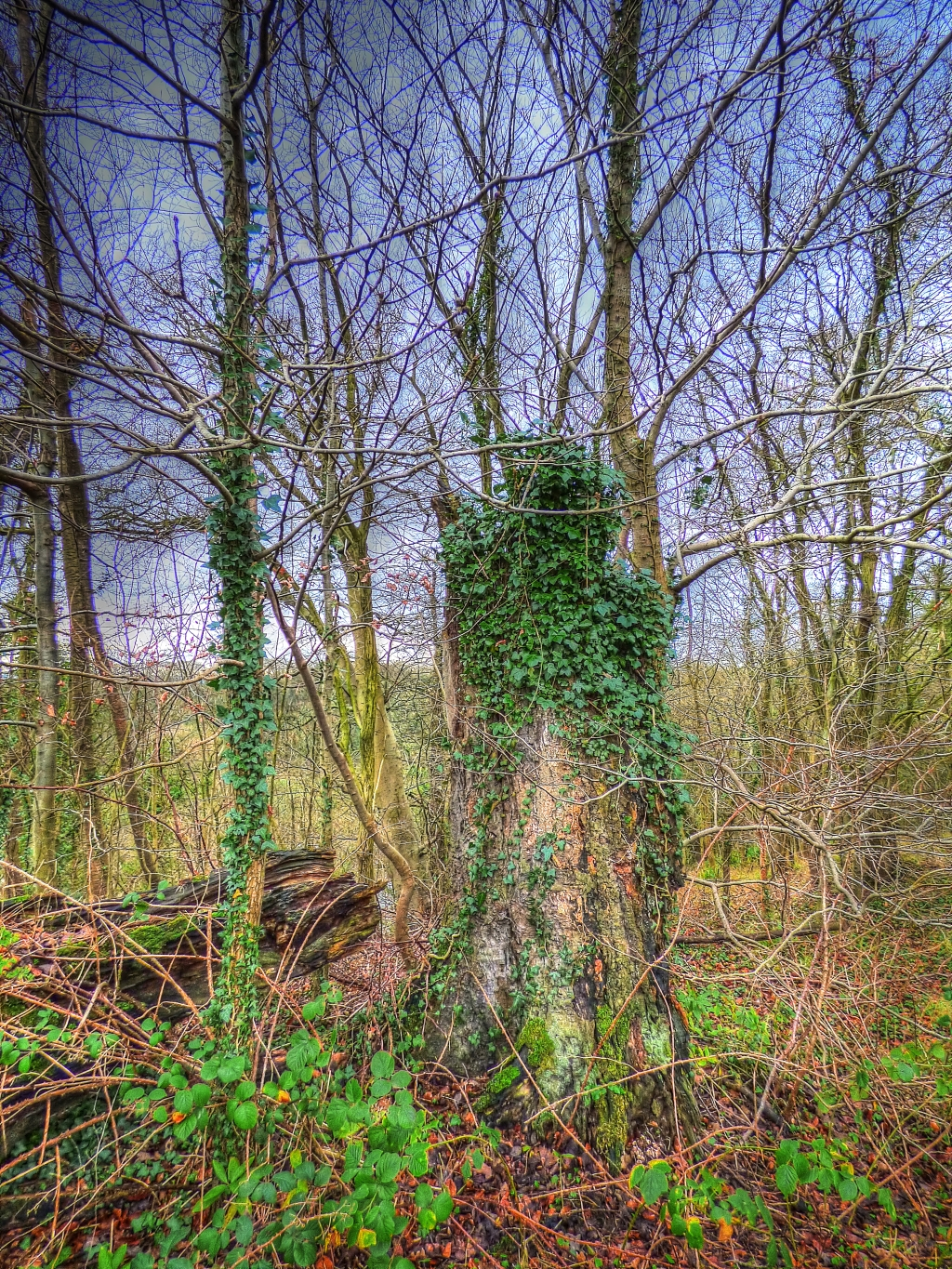tree stump covered in vines