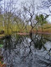 patterns in pond