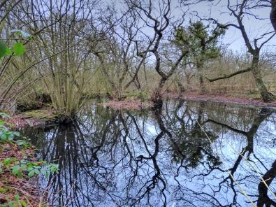 patterns in pond2