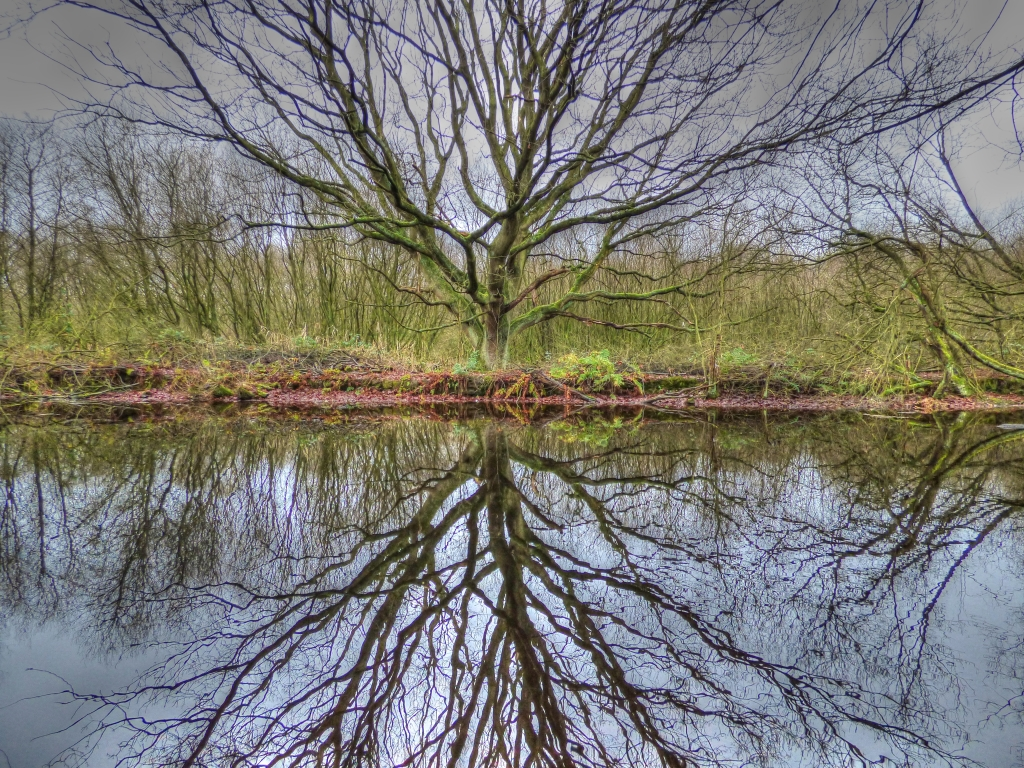 tree reflecting